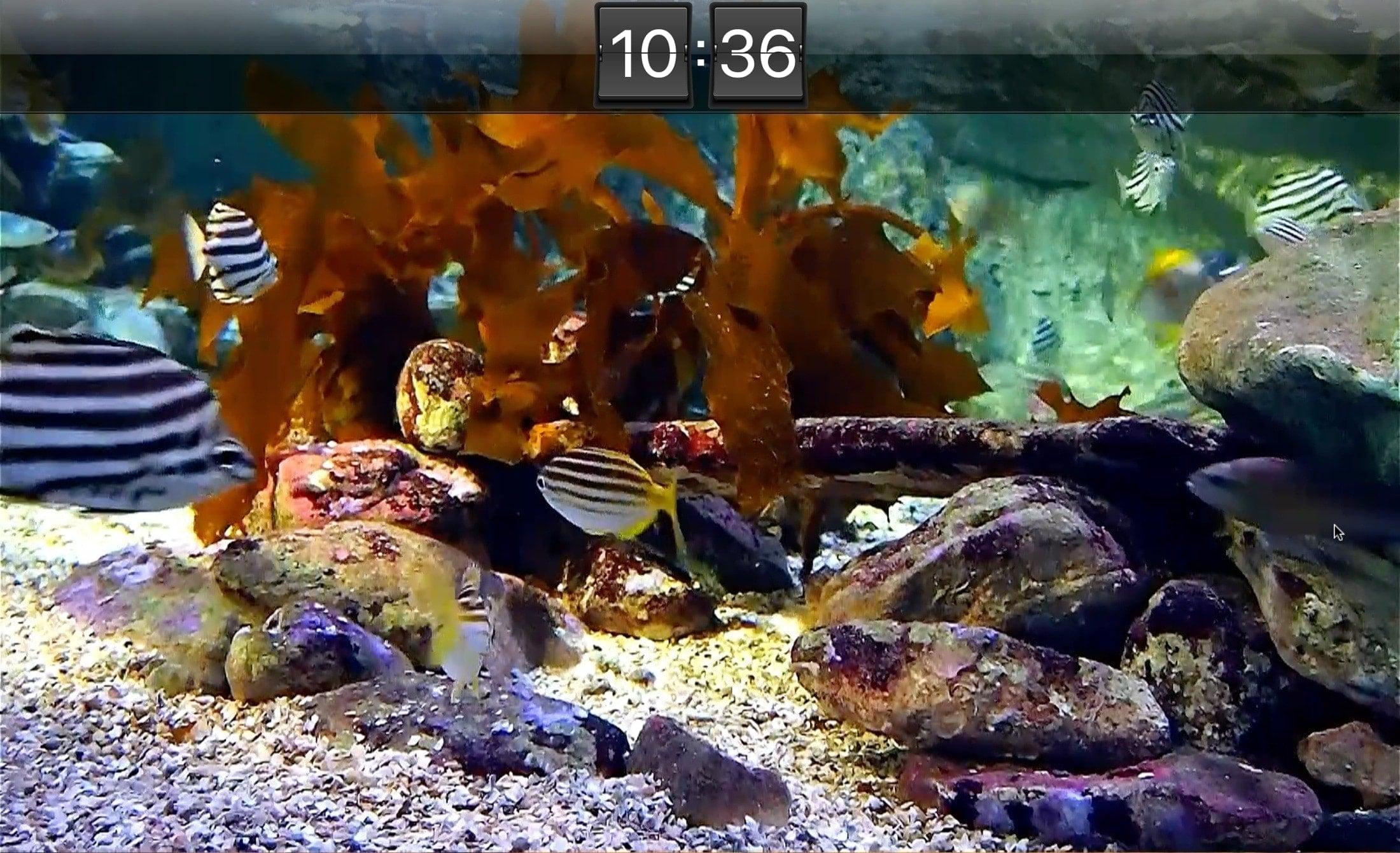 Akvaario Live HD -näytönsäästäjä Mac
