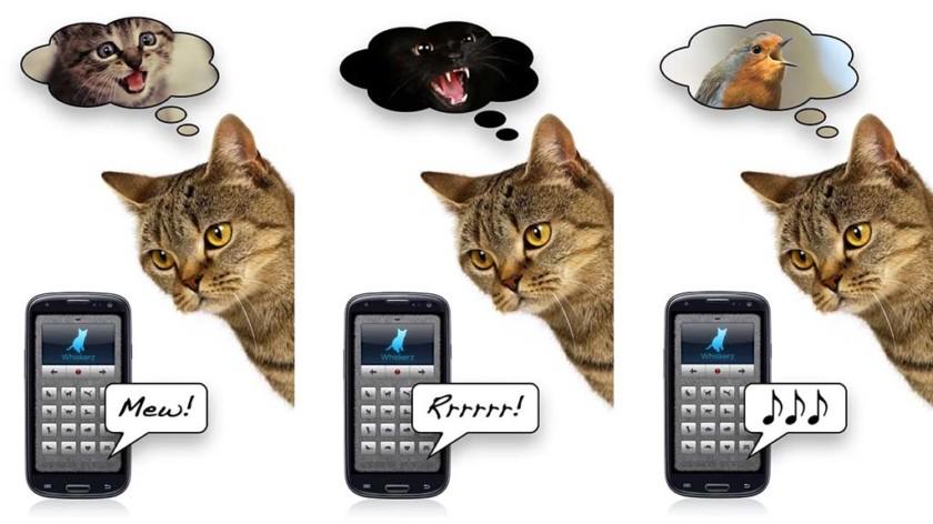 Ihmisistä eläimiin kääntäjät ovat hyödyttömimpiä sovelluksia